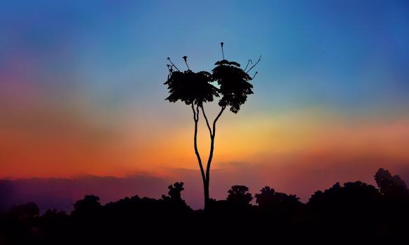 tree-1288117_1920